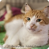 Adopt A Pet :: Jack Frost - Byron Center, MI