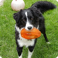 Adopt A Pet :: Tess-Adoption Pending - Midwest (WI, IL, MN), WI