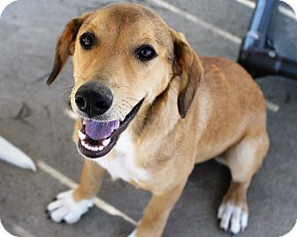 Shepherd (Unknown Type) Mix Dog for adoption in Mt Sterling, Kentucky - Cindy