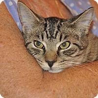 Adopt A Pet :: SOLA (low fee) - New Smyrna Beach, FL