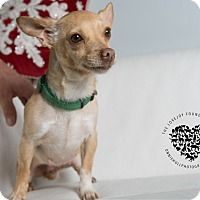 Adopt A Pet :: Bubbles - Inglewood, CA