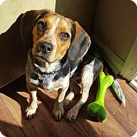 Adopt A Pet :: Maisy - Marietta, GA