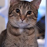 Adopt A Pet :: Roxanne - Geneseo, IL