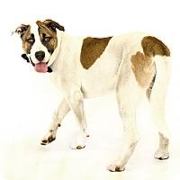 Adopt A Pet :: Champ - St. Cloud, FL