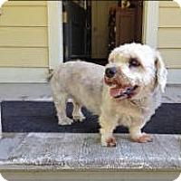 Adopt A Pet :: Buster - Bryan, TX