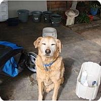Adopt A Pet :: Toby - Chandler, AZ