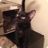 Adopt A Pet :: Jacques - Pittstown, NJ