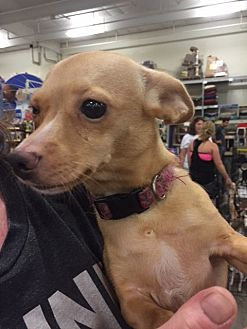 Terrier (Unknown Type, Medium) Mix Dog for adoption in Fresno, California - Sweetie