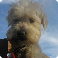 Adopt A Pet :: CUPID-WATCH MY VIDEO!!!! - Irvine, CA