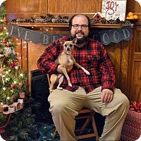 Adopt A Pet :: Daisy Mae - Huntington, IN