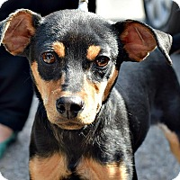 Adopt A Pet :: Hugo - Memphis, TN
