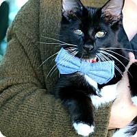 Adopt A Pet :: Fang - South El Monte, CA
