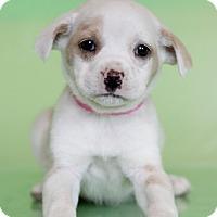 Adopt A Pet :: Felicity - Waldorf, MD