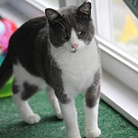 Adopt A Pet :: Willie - Troy, IL