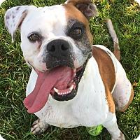 Adopt A Pet :: Oakley - Friendswood, TX