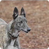 Adopt A Pet :: Faithful - Ft. Myers, FL