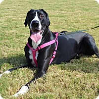 Adopt A Pet :: *Minnie - PENDING - Westport, CT
