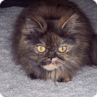 Adopt A Pet :: Missie - Laguna Woods, CA