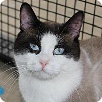 Adopt A Pet :: Antonio - Hamilton, ON