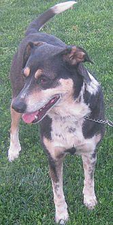 German Shepherd Dog/Feist Mix Dog for adoption in Hillsboro, Ohio - Melody