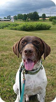 German Shorthaired Pointer Mix Dog for adoption in Lake Odessa, Michigan - Dutch