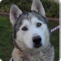 Adopt A Pet :: KONA - Red Bluff, CA