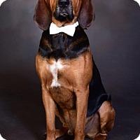 Adopt A Pet :: Ulysses - Atlanta, GA
