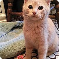 Adopt A Pet :: Gigi - Maywood, IL