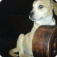 Adopt A Pet :: Hannah - Harrisonburg, VA