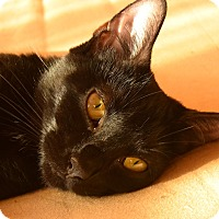 Adopt A Pet :: Lucille - New  York City, NY
