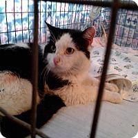 Adopt A Pet :: Urgent - Sly - wayne, MI