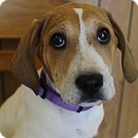 Adopt A Pet :: Scamp - Wytheville, VA