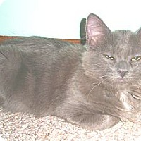 Adopt A Pet :: Hayden - in foster care - Milwaukee, WI