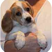 Adopt A Pet :: Peet - Portland, OR