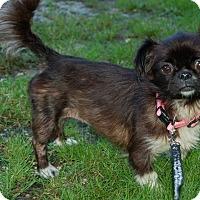 Adopt A Pet :: Pekin - Hazard, KY