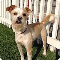 Adopt A Pet :: Roger - Santa Ana, CA