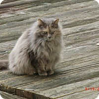 Adopt A Pet :: Patsy - Crescent City, CA