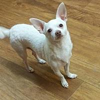 Adopt A Pet :: Tito - Ball Ground, GA