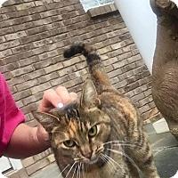 Adopt A Pet :: Ezera Jane - McDonough, GA