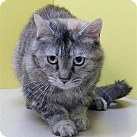 Adopt A Pet :: Princess - Sedona, AZ