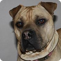 Adopt A Pet :: Mylee - Tillsonburg, ON