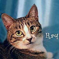 Adopt A Pet :: Raquel - Wichita Falls, TX