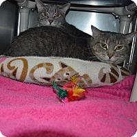 Adopt A Pet :: Thor & Loki - Wheaton, IL