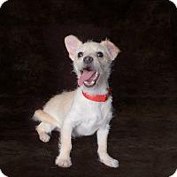 Adopt A Pet :: Danny - Van Nuys, CA