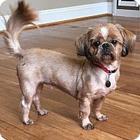 Adopt A Pet :: Rosie - Atlanta, GA