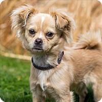 Adopt A Pet :: Louie - Golden, CO