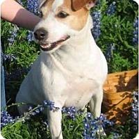 Adopt A Pet :: Kellie in Victoria - Houston, TX
