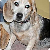 Adopt A Pet :: Willie - Port Washington, NY