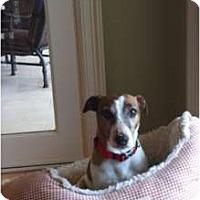 Adopt A Pet :: Bridges in Midland - Midland, TX