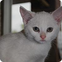 Adopt A Pet :: Nanook - Hamilton, ON